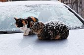 Two Stray Cats In A Cold Winter Snowy Day poster