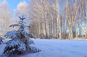 Winter Snow Forest Landscape. Winter Snow Forest Scene In Sunny Day. Winter Forest In Russia. Sunny  poster