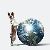 Dog with the Earth planet. Funny collage. Elements of this image are furnished by NASA