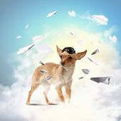 A dog wearing a helmet pilot. Dreams of the sky. Funny Collage