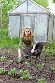 foto of couch potato  - The young woman couch a bed with the first sprouts of potato on a summer cottage - JPG