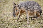 foto of wallabies  - A lone Wallaby at the local zoo - JPG