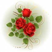 picture of red rose  - Three red roses on a white background - JPG