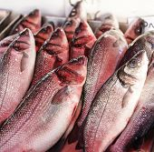 foto of red snapper  - fresh red snapper for sale in a fish market - JPG