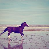 picture of dancing rain  - Dancing Horse on the North Sea Coast Photo Filter - JPG