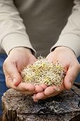 pic of soybean sprouts  - Heathy eating food - JPG