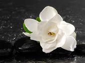picture of gardenia  - Single of white gardenia with therapy stones  - JPG