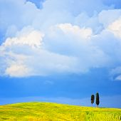 picture of senesi  - Tuscany two lonely cypress trees and rural hill - JPG