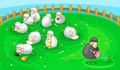 image of sheep  - good black sheep in spoil white sheep herd - JPG