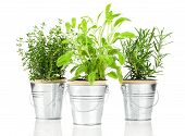 image of salvia  - Sage thyme and rosemary herb plant growing in a distressed pewter pot isolated over white background - JPG