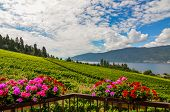picture of geranium  - Geranium flower baskets in front of vineyards and Okanagan Lake on a sunny day with clouds in the sky - JPG