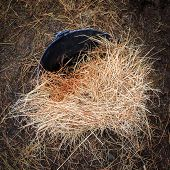 image of hay fever  - Hay in bucket on the ground outside a farm barn