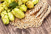image of hop-plant  - Barley and hops on a wooden background - JPG