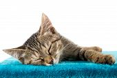 foto of blue tabby  - Grey tabby kitten lying on blue plush soft surface - JPG
