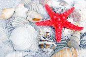 image of slug  - Red starfish - JPG