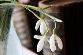 pic of vase flowers  - first spring flowers snowdrops spring background - JPG
