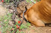 stock photo of character traits  - Digging dog thrust the head into a hole - JPG