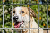 pic of forlorn  - Closeup of a dog looking through the bars of a fance outdoor - JPG