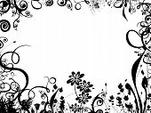 picture of white flower  - a black and white summer foliage border  - JPG