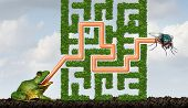 stock photo of maze  - Adapting to challenges being flexible concept as a green frog with a tongue solving a maze made of plants to catch a fly as a solution metaphor for adaptive success through learning and skill - JPG