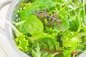 picture of rocket salad  - portion of salad - JPG