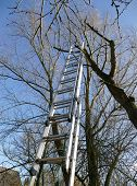 stock photo of tree trim  - ladder of aluminum at a bare tree for tree trimming blue sky gardening in fall or early spring - JPG