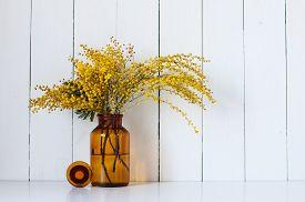 stock photo of mimosa  - Home decor - JPG