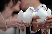 picture of hand kiss  - Happy young married couple kissing and holding two white pigeons as symbol of peace in hands horizontal picture - JPG