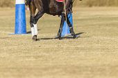 pic of pony  - Polo equestrian rider horse pony mallet goals abstract  game action - JPG
