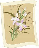 picture of night-blooming  - Vector background Wild flowers and Night Violet with Sepia framed - JPG