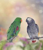 stock photo of parakeet  - African Grey Parrot and Green Parakeet Perching - JPG