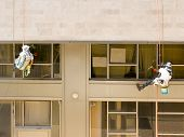 stock photo of window washing  - Two professional workers washing windows on a building - JPG