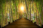 pic of bamboo forest  - wooden boardwalk in bamboo forest bright evening sun - JPG