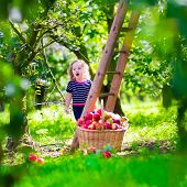 image of orchard  - Child picking apples on a farm climbing a ladder - JPG