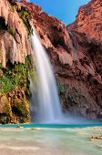 picture of oasis  - Oasis in the Grand Canyon - JPG