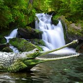 pic of crocodiles  - Gharial  - JPG