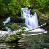 image of crocodilian  - Gharial  - JPG