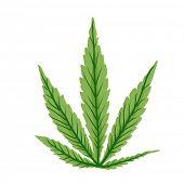 stock photo of cannabis  - Cannabis leaf - JPG