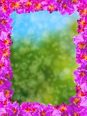 pic of debonair  - Frame of Beautiful Pink Orchids on Soft and blurred background - JPG