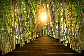 picture of bamboo  - wooden boardwalk in bamboo forest bright evening sun - JPG