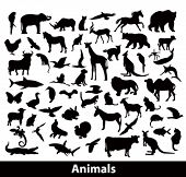 image of sea cow  - animals silhouettes - JPG