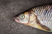 Head Of Raw Fresh Whole   Fish Over Wooden Background. Top View With Space. poster