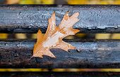 A Wet Leaf Of Oak Red In The Fall On A Bench In A Park In Rainy Weather poster