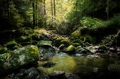 Rainforest River Nature Landscape. Stream In Rainforest Nature. Rainforest Stream. Nature. Stream. N poster