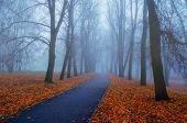 Autumn Landscape- Foggy Autumn Park Alley With Bare Trees And Dry Fallen Orange Autumn Leaves. Autum poster