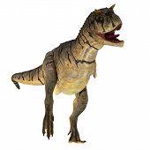 Carnotaurus Sastrei Dinosaur On White 3d Illustration - Carnotaurus Was A Carnivorous Theropod Dinos poster