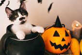 Cute Kitty Sitting In Witch Cauldron With Jack O Lantern Pumpkin With Candles, Broom And Bats, Ghost poster