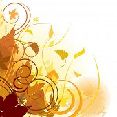 picture of fall leaves  - Autumn leaves background - JPG