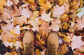 Casual Unisex Boots With Autumn Fallen Leaves. Autumn Fall Scene. Conceptual Image Of Legs In Boots  poster