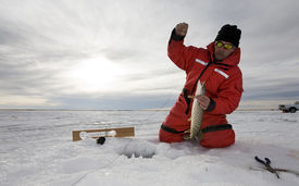 pic of ice fishing  - A man with a northern pike on a frozen lake  - JPG